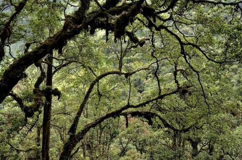 frédéric-demeuse-forest-photography-rwenzori-uganda