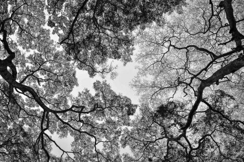 Forêt impénétrable de Bwindi - UNESCOOuganda