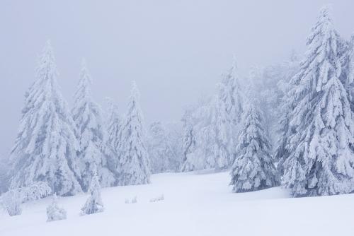 frédéric-demeuse-landscape-photography-forest-photography-winter-vosges-france