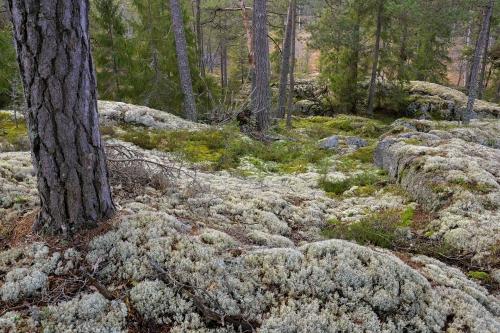 Vsion de forêts naturelles et /ou primaires.
