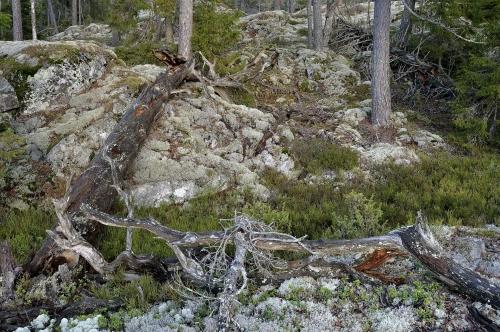 frédéric-demeuse-nature-photography-natural-places-tiveden-sweden