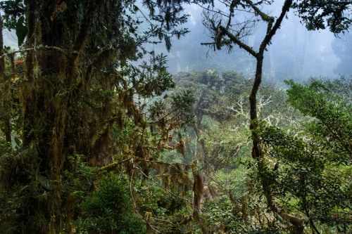 frederic-demeuse-nature-photo-rainforest-wald3