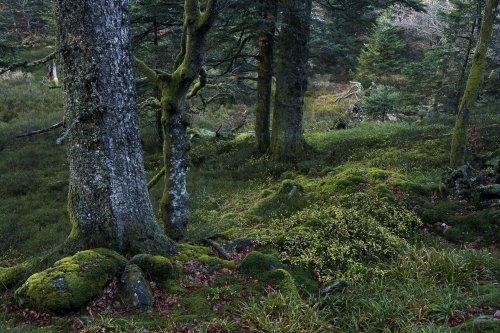 nature-photography-primeval-forest-vosges-france